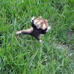 野生のハムスターの生活と習性から考えるペットとしてのハムスターとの接し方