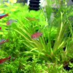 初めての熱帯魚|熱帯魚の仲間(種類)ってどんなものがあるの?