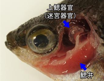 出典:http://www.michinoeki-yayoi.com/osakanakan/tokubetsuten/12tokuten/12tokuten.htm
