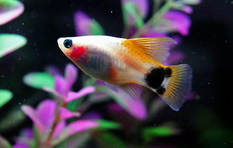 初心者でもお手軽に飼育できる!流行のオススメ熱帯魚20種類!