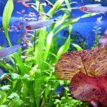 自宅でアクアリウムを楽しみたい方必見!流行のおすすめ熱帯魚TOP20!!