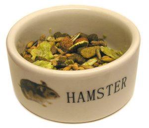 ハムスター021