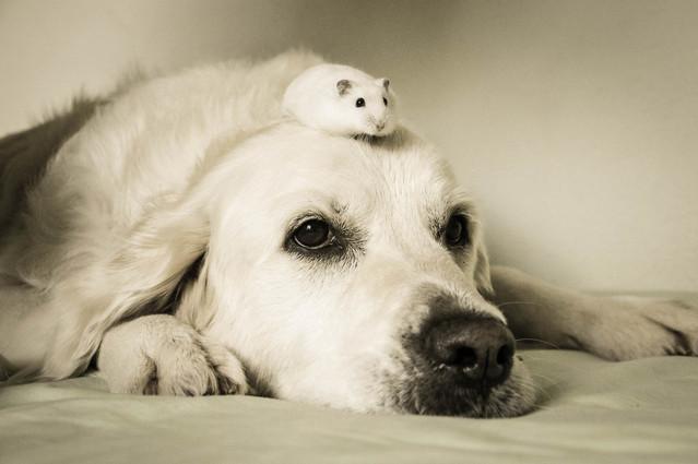 犬とハムスター